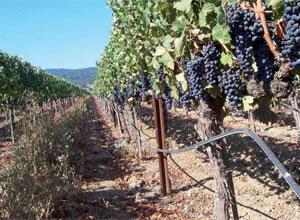 Irrigazione agricola e irrigazione vigneti gaiotto impianti for Irrigazione vigneto